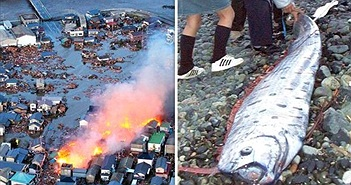 """Bắt được loài cá """"tận thế"""", người Nhật nơm nớp sợ thảm họa này"""