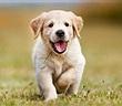 Những con vật may mắn chạy vào nhà sẽ mang theo tài lộc
