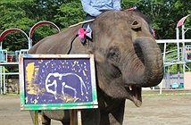 Kinh ngạc trước chân dung tự họa của voi ở Nhật Bản