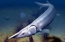 Hóa thạch 300 triệu năm của loài cá giống cá tầm