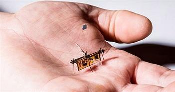 Kinh ngạc trước robot mini có thể thực hiện nhiệm vụ phức tạp