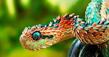 Những loài động vật quý hiếm bậc nhất thế giới