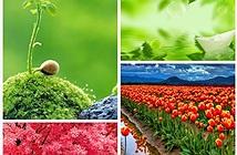 Cách ghép nhiều ảnh thành 1 ảnh bằng phần mềm Photoscape