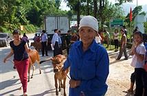 Viettel xây trạm xá, tặng bò giống cho xã nghèo của huyện Mường Lát
