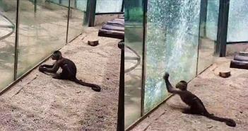 """Khỉ thầy tu thông minh khiến con người sợ hãi """"bội phục"""""""