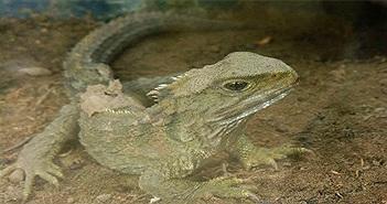 15 loài động vật sống lâu nhất quả đất