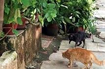 Kịch tính 4 mèo nhà hợp sức dằn mặt rắn hổ mang
