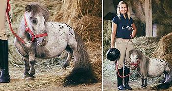 Chú ngựa nhỏ nhất thế giới hiện sống ở đâu, cao bao nhiêu?