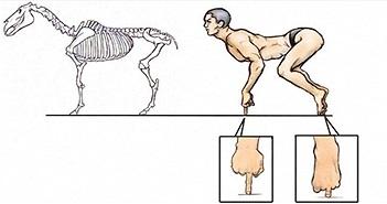 Điều gì sẽ xảy ra nếu cơ thể con người có cấu trúc tương tự động vật?
