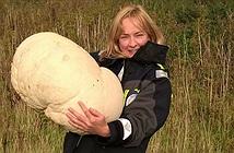 Nấm trứng nặng hơn 10kg ở Scotland