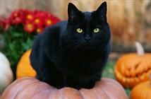 Những truyền thuyết muôn đời bí ẩn về Halloween