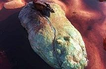 Dạo biển gặp thứ ngỡ báu vật, không ngờ là sinh vật rợn người...