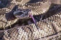 Giải mật sốc về loài rắn: Từng có chân