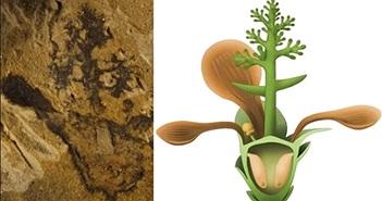 Tìm thấy loài hoa đầu tiên trên Trái đất