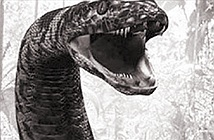 Ly kỳ chuyện rắn khổng lồ trên hòn đảo có 99 ngọn núi