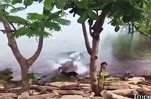Cá sấu nhanh như chớp chồm lên đớp chết chó bên bờ sông