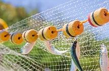 Ngư cụ làm từ nhựa có thể phân hủy bằng ánh nắng