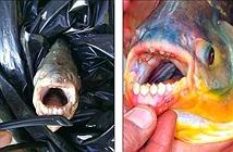Bắt được quái vật ăn tinh hoàn khét tiếng Amazon ở Mỹ