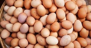 Canada tìm ra công nghệ phát hiện giới tính trứng gà trước khi ấp