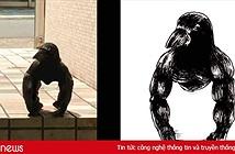 Con quạ ngồi xổm như khỉ đột khiến internet hoang mang, chuyên gia chim liền có câu trả lời