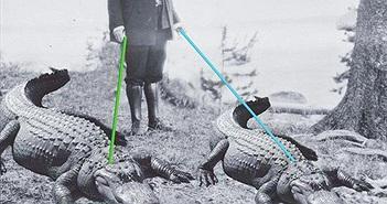 Chuyện dị về thú cưng của Tổng thống Mỹ: Cá sấu sống sang chảnh