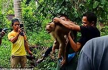 Khỉ nổi điên cắn chết chủ khi bị ép làm việc