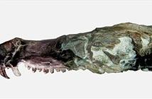 Kinh ngạc hóa thạch lớp Thú giống loài sóc trong Kỷ băng hà
