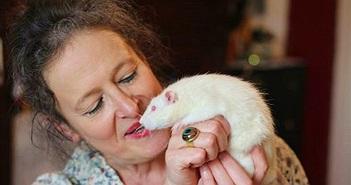 Lạ kỳ vận động đòi rải thuốc tránh thai cho… chuột