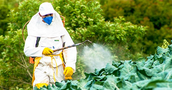 5 lầm tưởng tai hại về thuốc trừ sâu dùng trong canh tác cây trồng và tồn dư trong rau củ quả