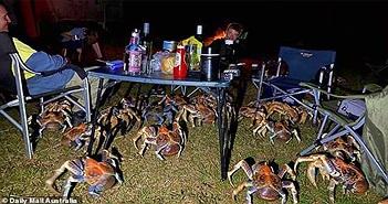 Kinh hãi cảnh đàn cua khổng lồ ồ ạt tấn công cướp đồ ăn của khách du lịch