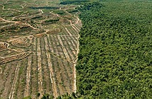 Kỷ nhân sinh Anthropocene và những vết sẹo con người rạch vào Đất Mẹ