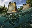 Phát hiện hàng trăm chiếc răng của khủng long săn mồi lớn nhất