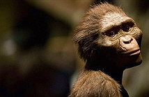 Chiêm ngưỡng hàm răng 9,7 triệu năm tuổi vừa được phát hiện