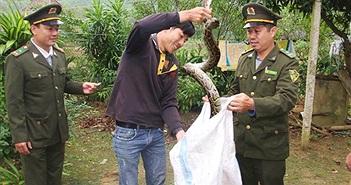 Hà Tĩnh: Thả 2 con trăn gấm quý hiếm về môi trường tự nhiên