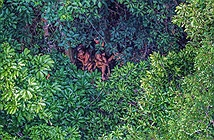 Cuộc sống bất biến qua 20.000 năm của bộ lạc rừng Amazon