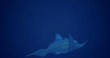 Con cá giống hệt phim hoạt hình này cho thấy thiên nhiên có thể gây bất ngờ đến mức nào
