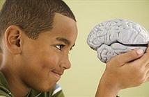 """Havard nghiên cứu não người để chế tạo """"bộ óc"""" hoàn hảo"""