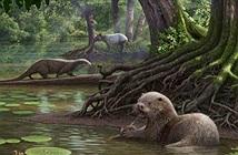 Khám phá bá chủ đầm lầy ở Trung Quốc 6 triệu năm trước