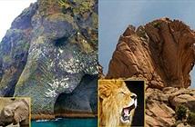 Tròn mắt với những tảng đá khổng lồ giống hệt động vật
