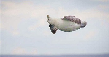 Chú chim bỗng nổi tiếng thế giới nhờ biết sống hưởng thụ