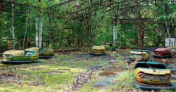 Tại sao thảm họa nguyên tử Chernobyl không giết hết tất cả các loài thực vật?