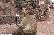 Lần đầu ngắm mình trong gương, khỉ cái bàng hoàng vì nhan sắc...