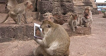 """Lần đầu ngắm mình trong gương, khỉ cái bàng hoàng vì """"nhan sắc""""..."""
