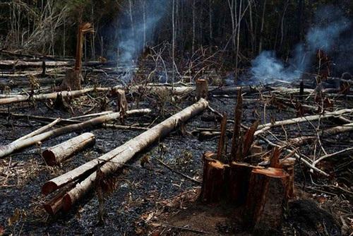Cháy rừng Amazon: Hiểm họa không chỉ riêng ai!