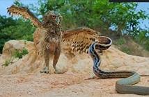 Cú mèo đối đầu rắn dữ, bị mổ vào mặt rồi bị đối thủ quấn chặt bất động: Kết cục ra sao?