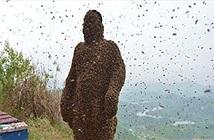 Cho 450.000 con ong đốt, gột sạch ai nấy đều choáng khi nhìn thấy...