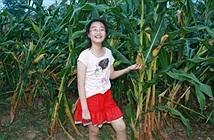 Con gái 16 tuổi lẻn vào ruộng ngô mỗi đêm và cái kết cảm động