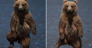"""Gấu con nhảy nhót vũ điệu rừng rậm """"dọa"""" nhiếp ảnh gia"""