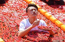Kinh dị ngồi giữa 5 tấn ớt chỉ thiên, đua nhau ăn theo giây