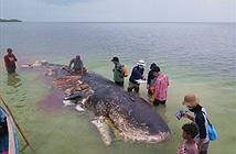 Mổ xác cá khổng lồ, phát hiện thứ ám ảnh bên trong